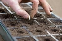 Calendrier des semis au potager (Fiches conseils)