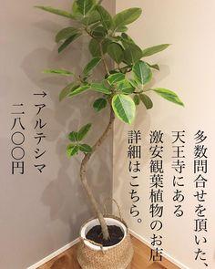 Face Care Routine, Bonsai Garden, Facial Care, Green Flowers, House Plants, Interior Architecture, Room, Minami, Home Decor