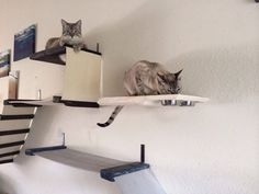 This is a neat idea for giving the cats more vertical space that doesn't take up too much room (1 foot clearance on the walls). Save for when I have my own house =)