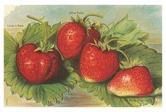 S/6 Strawberry Place Mats on OneKingsLane.com