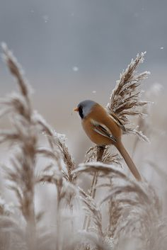 #Winter #bird #snow #blue #brown #photography
