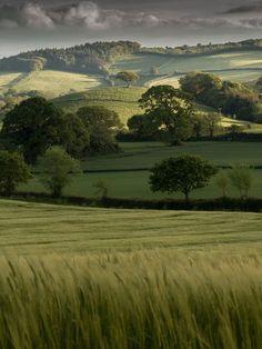 The Rolling Hills of Devon, England.