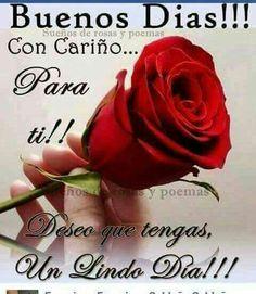 Poemas Con Rosas Hermosas Musicadelrecuerdo Org Frases Con Fotos