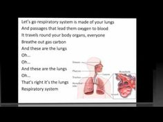 Amazing Respiratory System Video!    Each day I'm breathing air in, I'm breathing air in  The air is sucked through nose and mouth  Mucus it warms and moistens, it warms and moistens  The trachea the air goes down    Yeah, the trachea divides in two  Both primary bronchus too  And you know it do, know it do  Y...