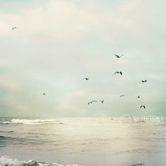 Ocean Dreams- Seagulls Flying Over Ocean Signed by MaleahTorney, $30.00