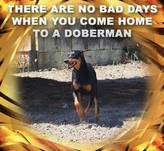 Doberman                                                       …
