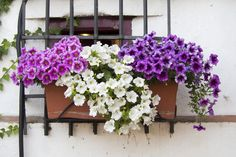 TOP 10 BALCONY PLANTS A balcony garden should be an extension of your home, choosing the correct plants will create an urban oasis you will want to escape to. Here are 10 plant suggestions that work well on a apartment balcony. Apartment View, Apartment Entryway, Apartment Balconies, Diy Apartment Decor, Apartment Plants, Apartment Ideas, Balcony Plants, Balcony Garden, Balcony Ideas