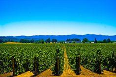Vineyards, Santa Rosa