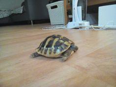 Moje želva Lenka