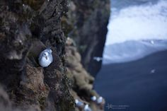 My Photos, Relax, Pearl Earrings, Birds, Pearls, Pearl Studs, Bird, Beads, Beading