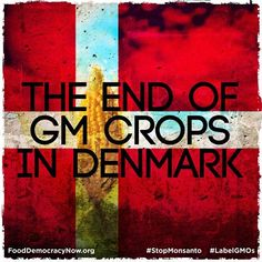 The End Of GM Crops In Denmark!