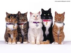 Papel de Parede de Gatos - Download papel de parede