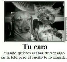 Jajajaja #humor #frases