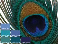 #dulux #homedecor #peacock #blue #green #seagreen #teal