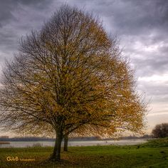 the last ones Last One, Autumn Leaves, Country Roads, Holland, Instagram Posts, The Nederlands, Fall Leaves, Autumn Leaf Color, The Netherlands