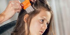 Lice are external parasites that make their home on the scalp. Head lice can live up to 30 days on a host. Those who prefer natural alternatives can try home remedies for lice, instead. Essential Oils For Lice, Head Lice Comb, How To Treat Lice, Lice Nits, Lice Shampoo, Lice Remedies, Hair Lice, Head Lice Prevention, Lice Removal