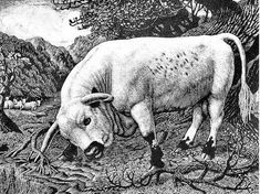 """Modern British Art Works by Charles Frederick Tunnicliffe R.: """"The Chartley Bull, Vintage Illustration Art, Book Illustrations, Nature Artists, Animal Drawings, Drawing Animals, Wood Engraving, Woodblock Print, Art Images, Art Prints"""