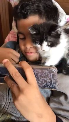 Funny cats compilation 2016 Best funny cat videos ever by Funny Vines.Hope you like a new funny cat videos compilation funny cats and silly cats . Cute Kittens, Cute Baby Cats, Cute Funny Animals, Cute Baby Animals, Animals And Pets, Funny Cats, Gato Gif, Cute Animal Videos, Funny Cat Videos
