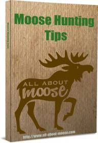 The Best Moose Hunting Tips Revealed Here!