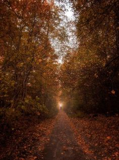 Photography by Ahmed Alalousi (from Irak) Autumn in Finland - Syksy.