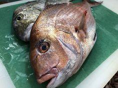Fish, Meat, Pisces