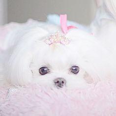 »oh darling we're too glam«  ♡@princessslyn♡