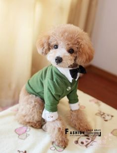 1000+ images about Toy poodle on Pinterest