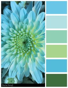 Blue Flower Color Scheme, Freelance Graphic Desinger based in Buffalo NY, Rachel Rising Design can assist you in your creative needs. Color Schemes Colour Palettes, Colour Pallette, Color Palate, Color Combos, Paint Color Schemes, Room Colors, Colours, Design Seeds, Paint Colors For Home