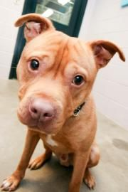 Hi. My name is Piglet.  I am 3 yr old Terrier, Pit Bull/Mix, extremely cute and Jane is not allowed to adopt me.  http://www.hswestmi.org/gallery.htm