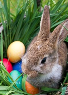 Baby Animals Super Cute, Cute Baby Bunnies, Cute Animals, Easter Art, Easter Bunny, Happy Easter Wallpaper, Happy Easter Wishes, Cute Bunny Pictures, Beautiful Rabbit