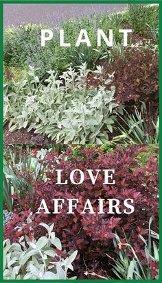 Some garden plants just look great together. When you change the texture of plants next to each other, each one becomes more showy due to the contrast. When you change the color, this can have a big impact too.although subtle changes in color can be jus Front Yard Landscaping, Backyard Landscaping, Landscaping Ideas, Backyard Ideas, Vertical Garden Plants, Love Garden, Witch's Garden, Garden Spaces, Front Yard Design