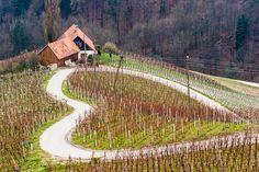 Slovenia Vineyard.  I Love Wine! ~ Hans Kruse #vinosmaximum #wine