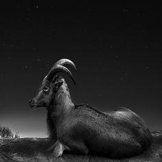 Cosmos by Noah Van Der Veer