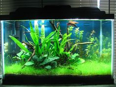 "My First Planted Tank - 10 Gallon low-tech ""Betta Haven"" - Aquascaping - Aquatic Plant Central"