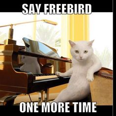 Sorry, I just had to.. @gyzelidew #catstagram #pianoninja #freebird