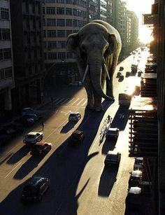 Lighting a Giant Elephant - Worth1000 Tutorials
