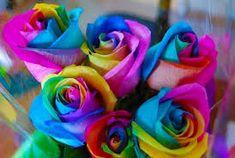 Resultado de imagem para Rosas dALIAS
