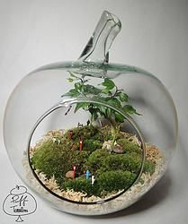 Japanese Apple Festival Terrarium
