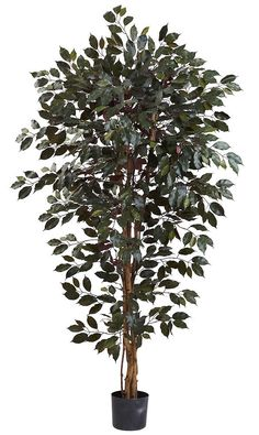 Capensis Ficus Artificial Tree with Nursery Planter   6 feet