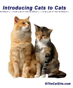 Cat Behavior and Training - Multi-Cat Households - Adding a New Cat - VCA Animals Hospitals Bear Dog Breed, Dog Breeds, Sleepy, Cat Behavior, Cat Life, Cat Toys, Crazy Cats, Pet Care, Cats And Kittens