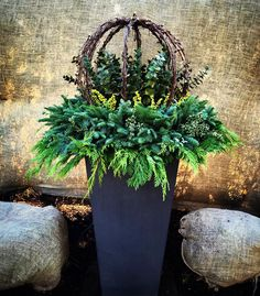 Winter Planters containing Lit grapevine wrapped spheres, Citrus Eucalyptus, Lime berry spray and lit mixed greens. By: Andrew VanHarken Christmas Urns, Outdoor Christmas Decorations, Holiday Decor, Christmas Garden, Xmas, Holiday Ideas, Fall Decor, Winter Container Gardening, Container Plants
