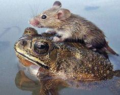Cutest Unlikely Animal Friendships