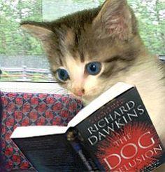 Atheist cat @Jenosaurus Sloan