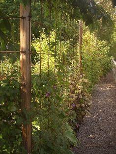 Reinforcement mat as fence do you have pictures? Everything about Garden Diy Garden, Garden Cottage, Garden Trellis, Garden Fencing, Dream Garden, Garden Pictures, Garden Structures, Garden Planning, Garden Inspiration