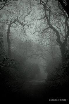 Lacertine Forest