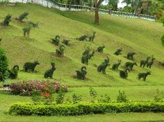 Pung-Waan Resort - great idea to create a herd of animals on a hillside from topiary
