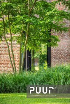 Dream Garden, Home And Garden, Garden Trees, Ornamental Grasses, Green Plants, Succulents Garden, Garden Planning, Garden Inspiration, Beautiful Gardens