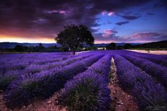 Purple lines by Julien Delaval on 500px