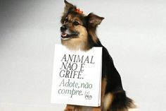 "Animals are not designer brands. Adopt, don't buy!"" Ronaldo Fraga, São Paulo Fashion Week"