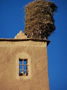 A very tall stork nest in Morocco (they can be up to 10 feet!) - as in THE WHEEL ON THE SCHOOL, by Meindert DeJong. Free template +  lots of fun activity ideas & teaching materials at https://litwits.com/the-wheel-on-the-school/     #litwitskits